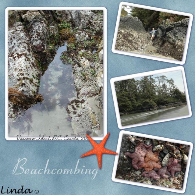 bchcomb
