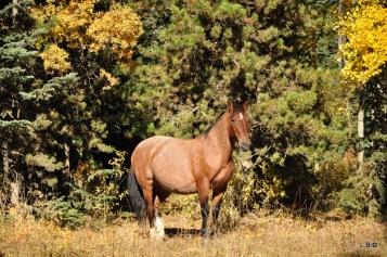 A pregnant mare.